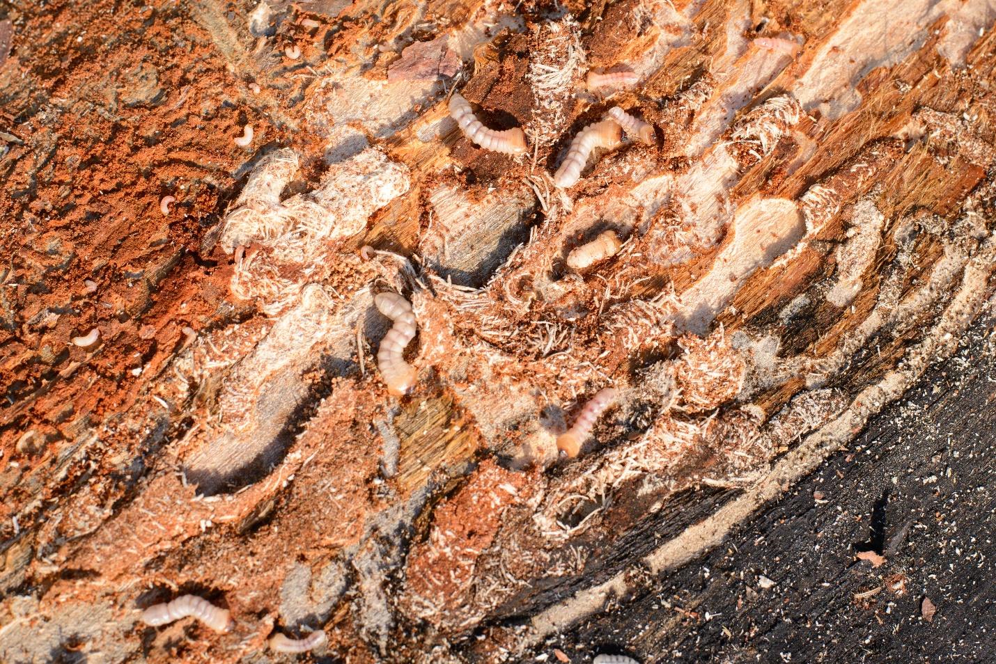 Wist Je Dat Ook Schepen Last Hebben Van Houtwormen?